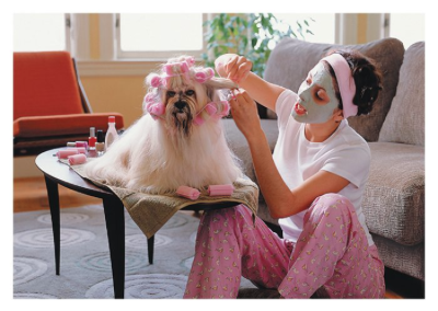 Dog in Curlers - 1