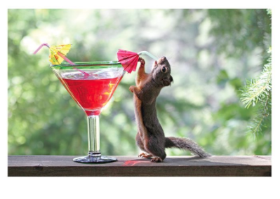 Squirrel Drink