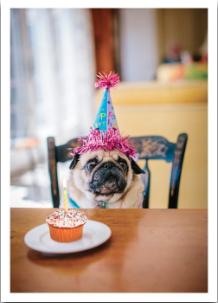 Pug Cupcake