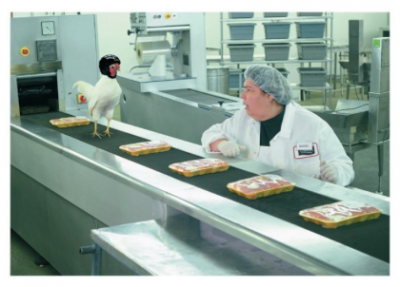 Chicken in Conveyor - Palm Press