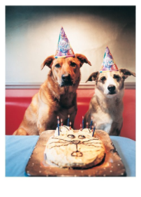 Dogs & Cat Cake - Palm Press
