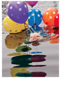 Pig Balloons - Palm Press
