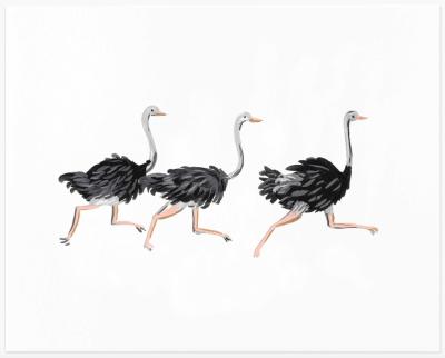 Ostrich Art Print - Kunstdruck