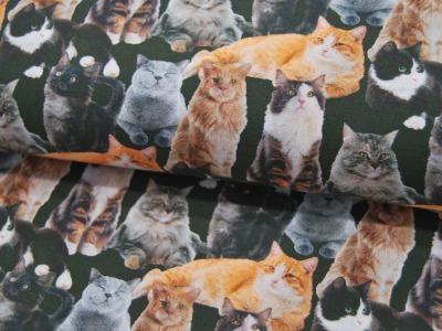 Baumwolle - Katzen - Digitaldruck