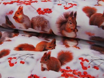 Jersey - Squirrels - Eichhörnchen -