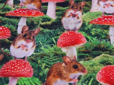 Jersey Mushroom Mouse Maus und Pilze
