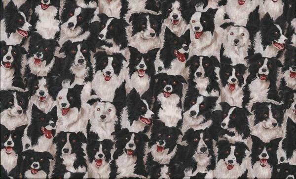05m BW Farmyard Border Collie Hund