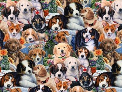 05m BW Garden Puppies Hunde Welpen