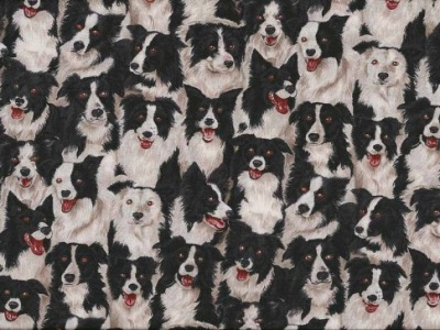 05m BW Farmyard Border Collie Hund
