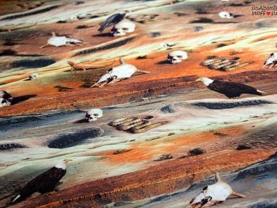 0,5m Jersey Digitaldruck Unter Geiern Wüste Foto