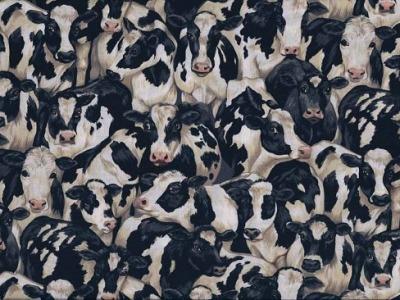 05m BW Farmyard Cows Kuh Kühe