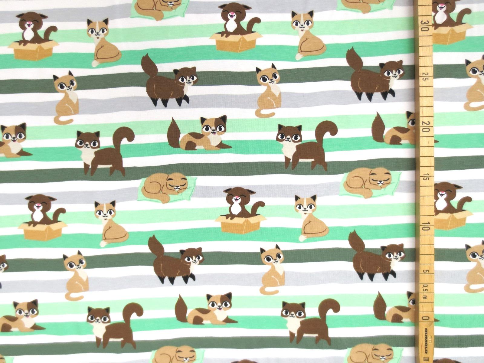 Jersey Katzen - geringelt 4