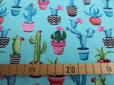 25 cm - Reststück - Kaktus