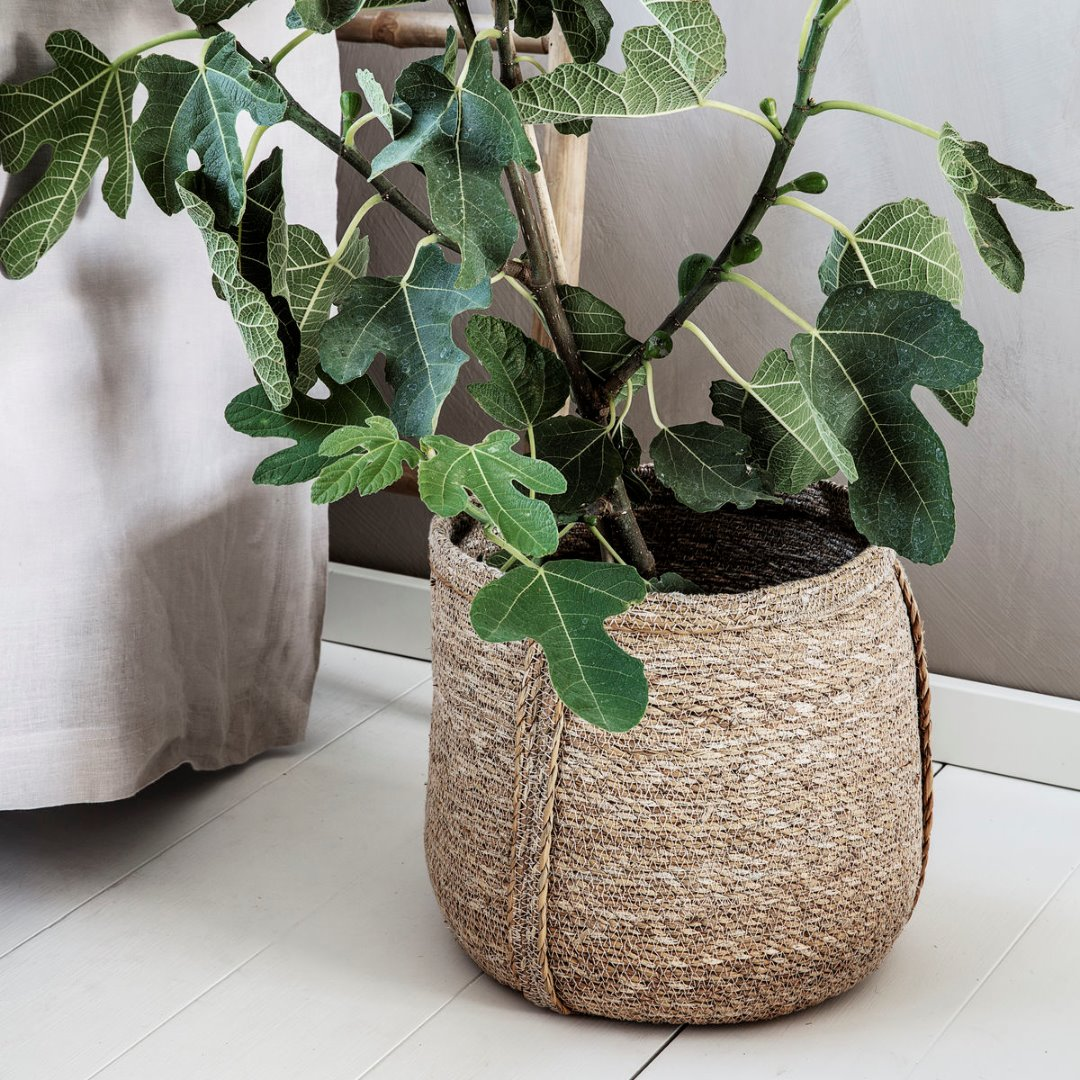 2er Set Körbe Plant 2
