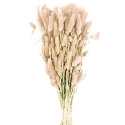 Lagurus- natur - ca 50gr