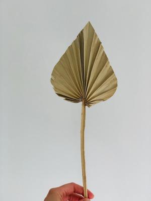 3 Stk Palmspear - ca 40cm