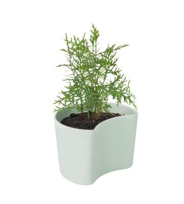 Your Tree Blumentopf mit Samen grün