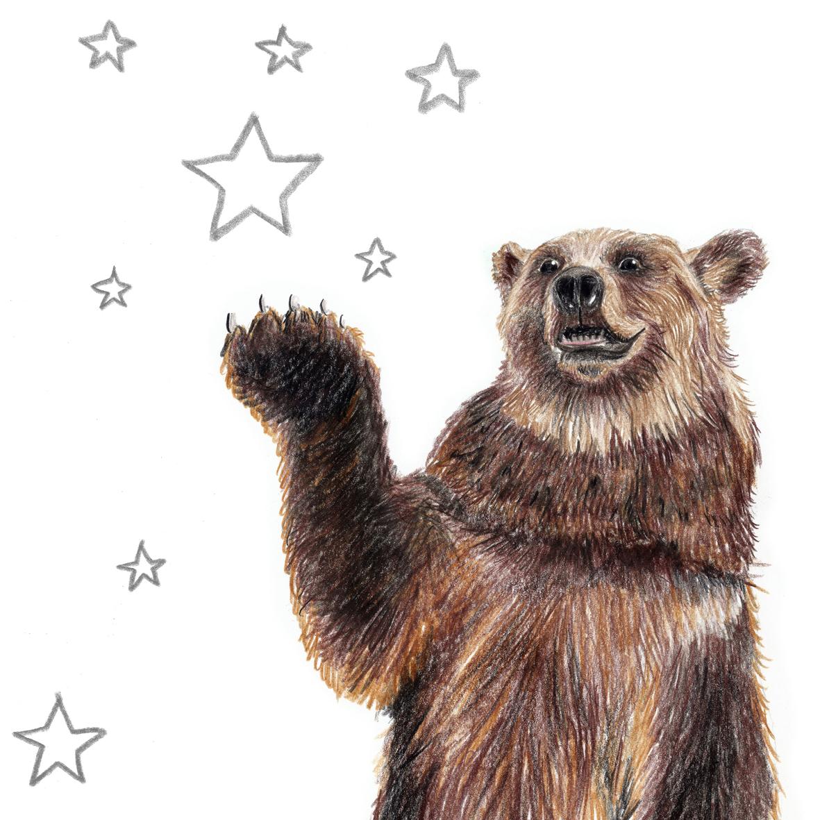 Zeichnung Bär mit Sternen, Kunstdruck, Poster, A4