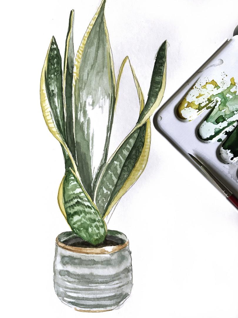 Sanseveria, Bogenhanf, Poster, Kunstdruck, Pflanzenposter, Pflanzenzeichnung, Pflanzen Aquarell - 2
