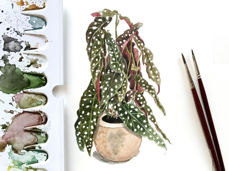 Forellenbegonie, Poster, Kunstdruck, Pflanzenposter, Pflanzenzeichnung, Pflanzen Aquarell - 2