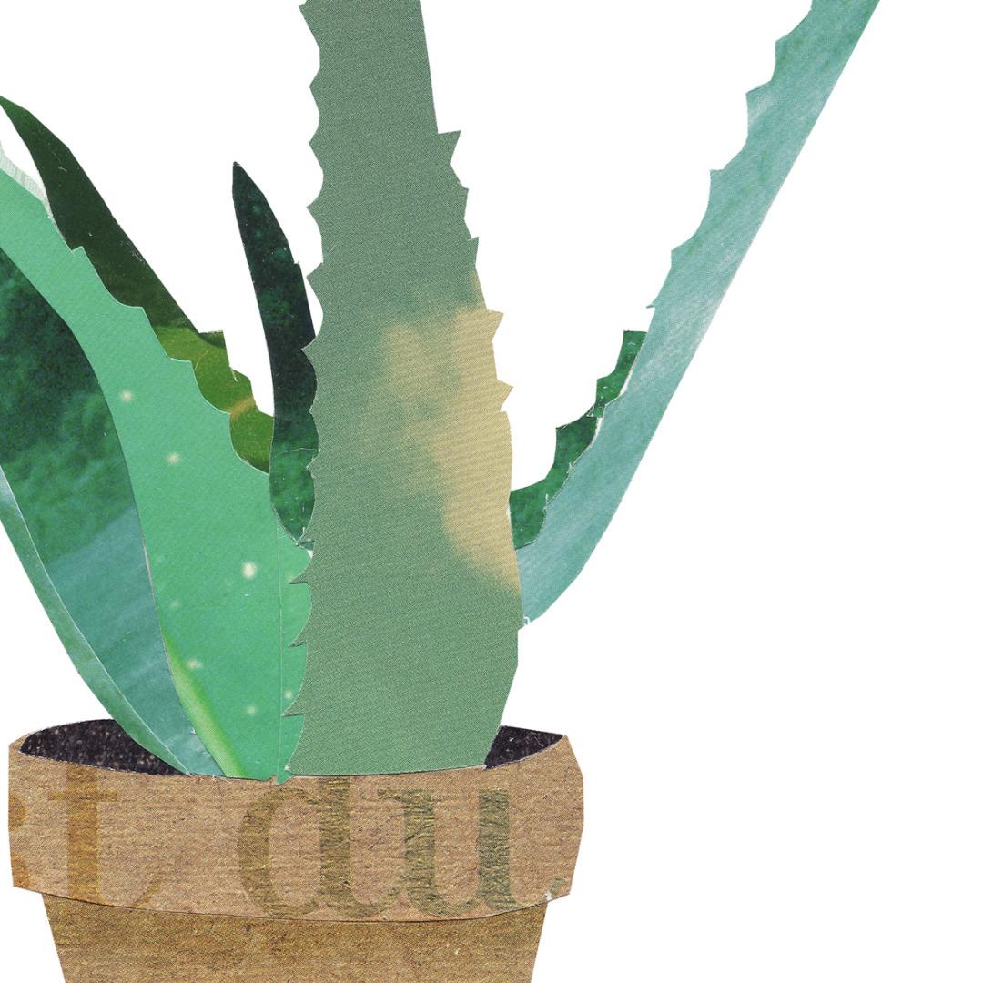 Collage Aloevera Kunstdruck Pflanzenposter - 2