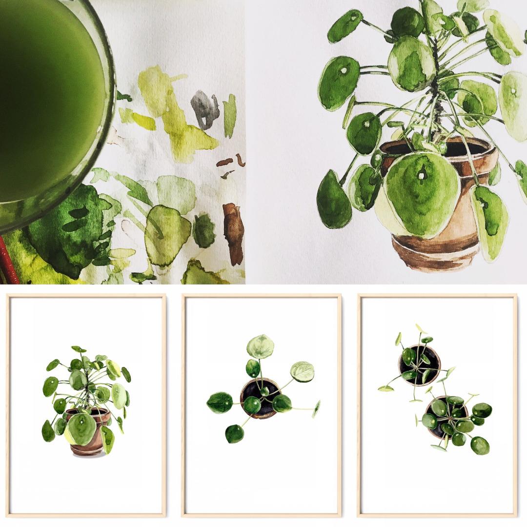Pilea 03, Poster, Kunstdruck, Pflanzenposter, Pflanzenzeichnung, Pflanzen Aquarell - 2