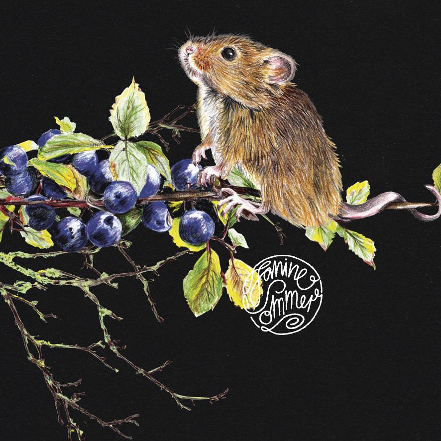Maus mit Blaubeeren , Poster, Kunstdruck, A4, Buntstiftzeichnung - 2