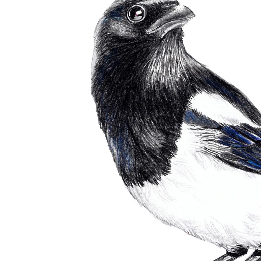 Elster Vogel Poster Kunstdruck 2