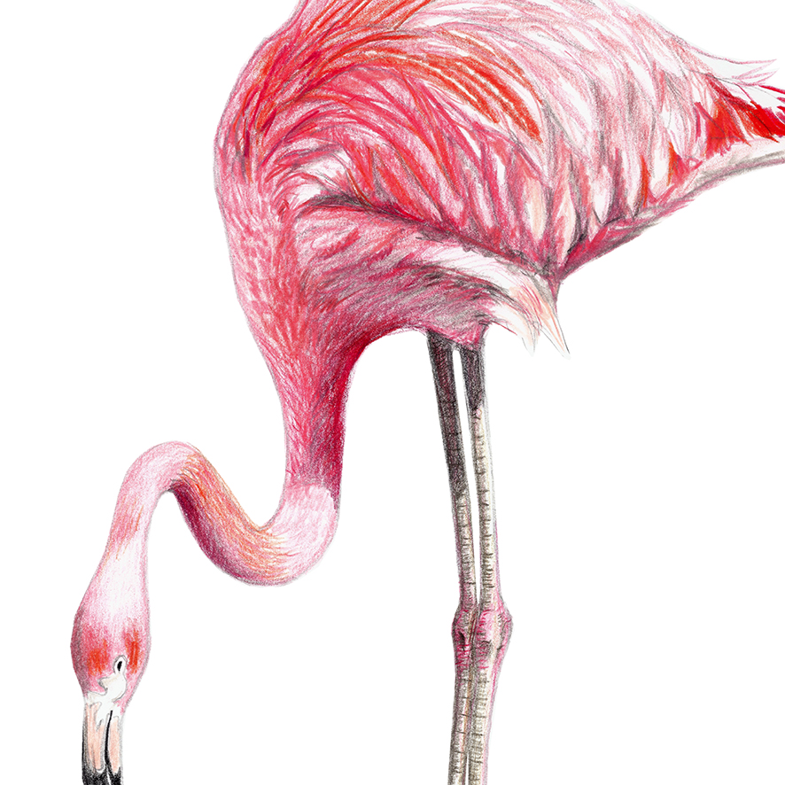 Flamingo Poster Kunstdruck