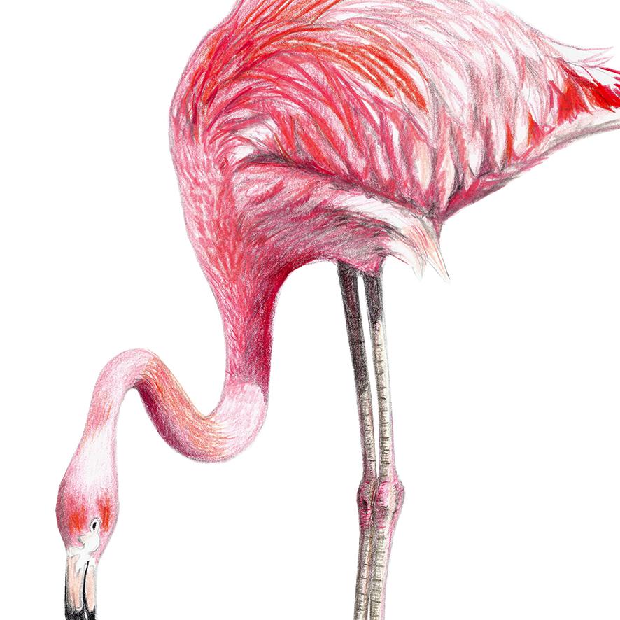Flamingo Zeichnung Poster Kunstdruck A4 - 2