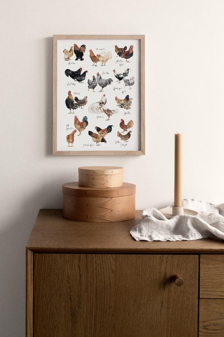 Hühnerarten Hühnerposter Poster Kunstdruck DIN A3