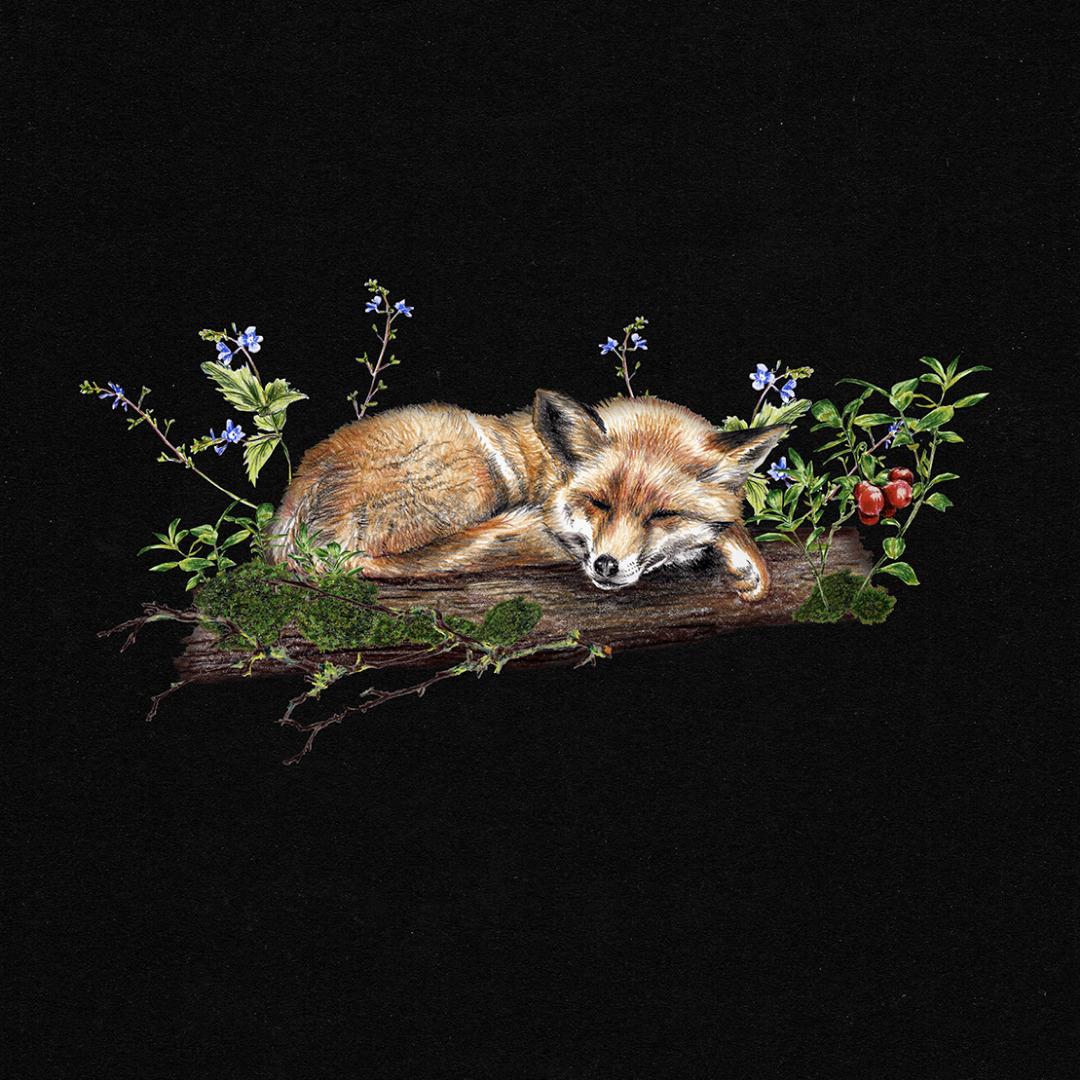 Fuchs im Wald , Poster, Kunstdruck, A4, Buntstiftzeichnung - 2