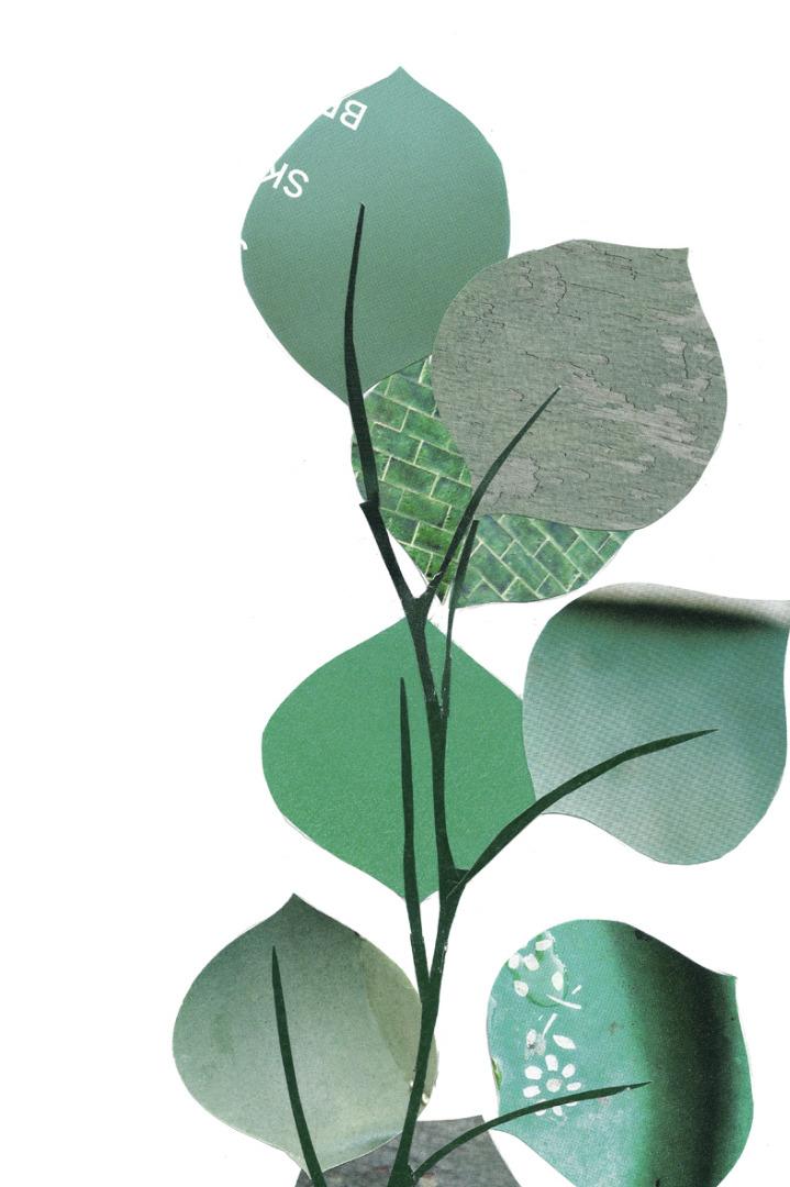 Collage Eukalyptus Kunstdruck Pflanzenposter