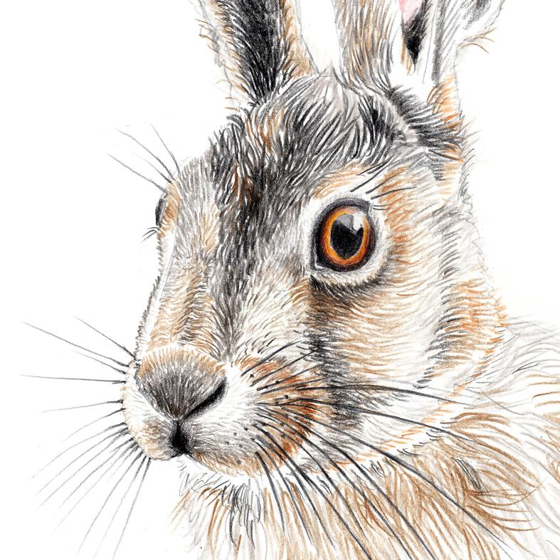Zeichnung Hase Poster Kunstdruck A4 3