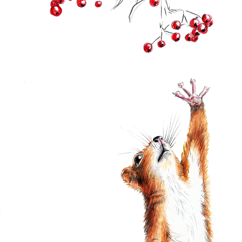 Zeichnung Eichhoernchen Poster Kunstdruck A4