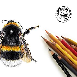 Hummel 01 Zeichnung Kunstdruck DIN A5
