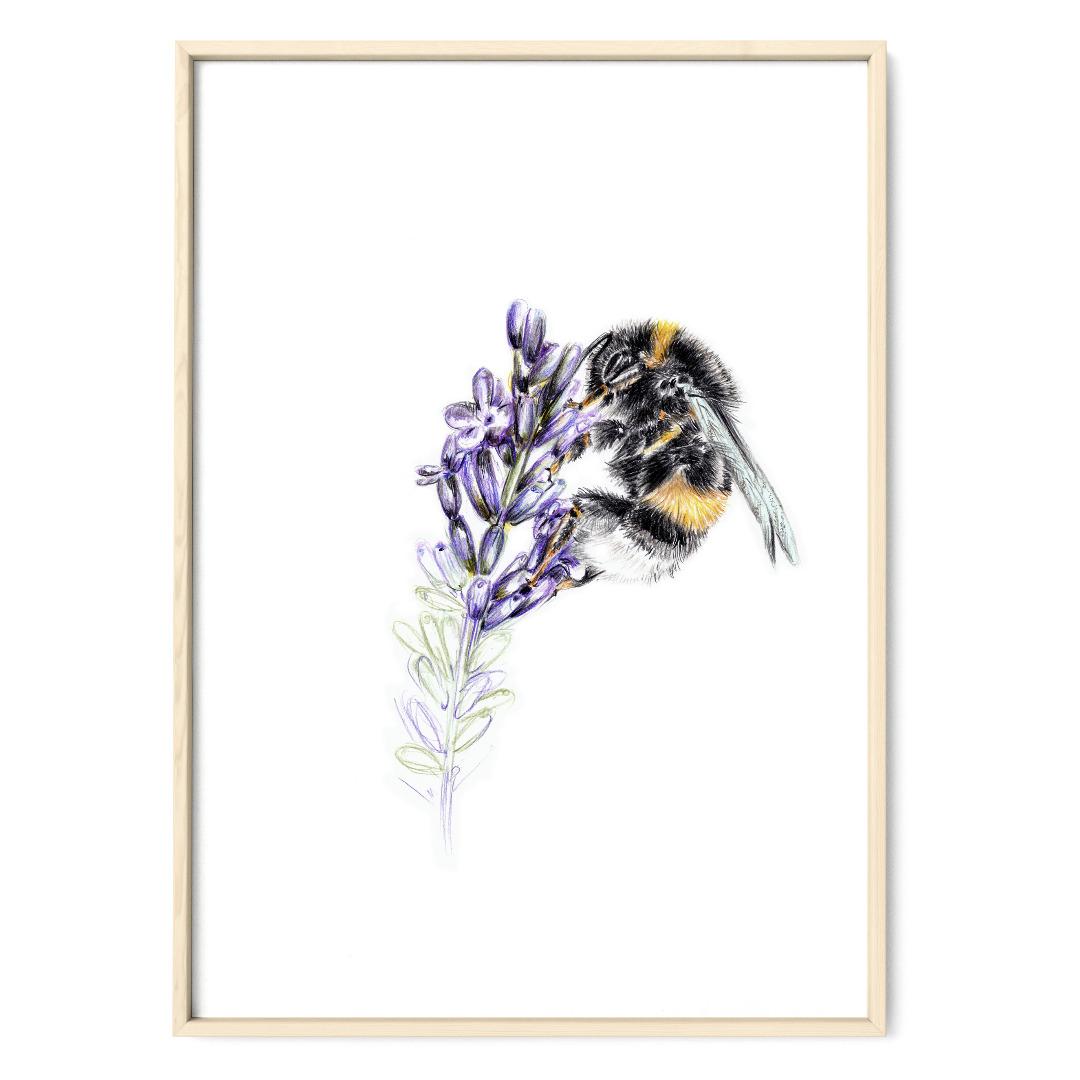 Hummel am Lavendel Poster Kunstruck DIN