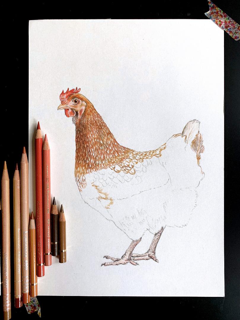 braunes Huhn mit Küken, Poster, Kunstdruck, Art Print Hühnezeichnung Huhn gezeichnet Tierbilder