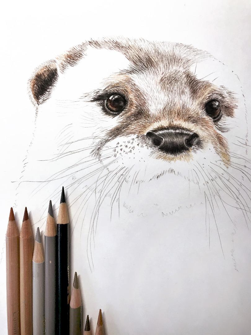 Otter Zeichnung Poster Kunstdruck Tierportrait 3