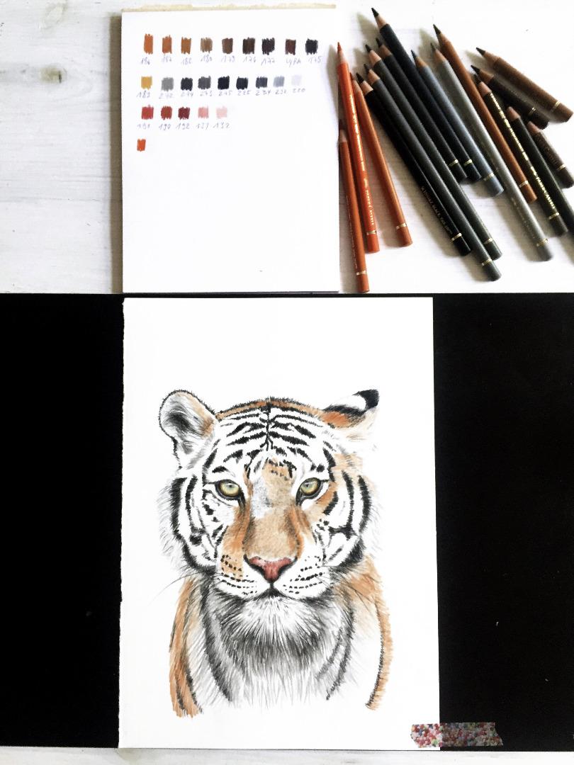Tiger Poster Kunstdruck Tigerzeichnung 2