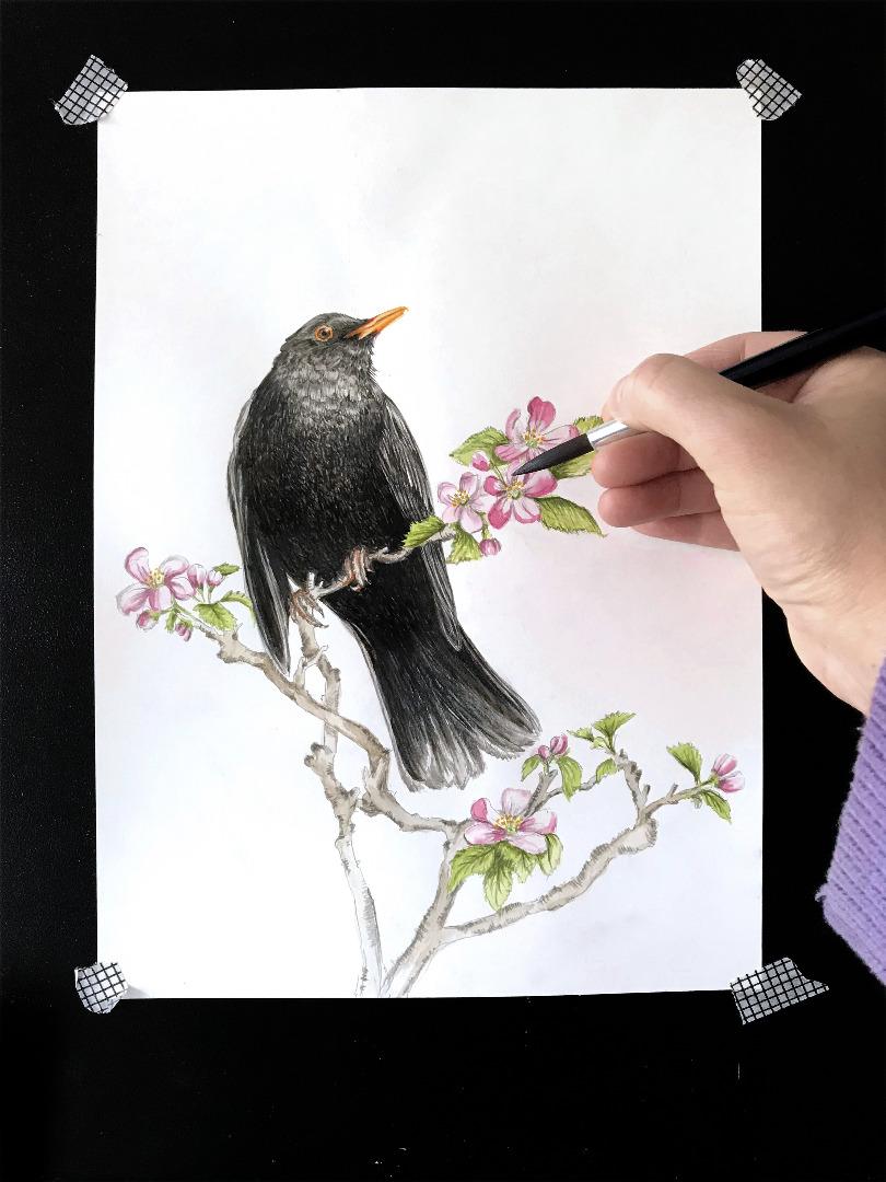 Amsel im Apfelbaum Poster Kunstdruck Art