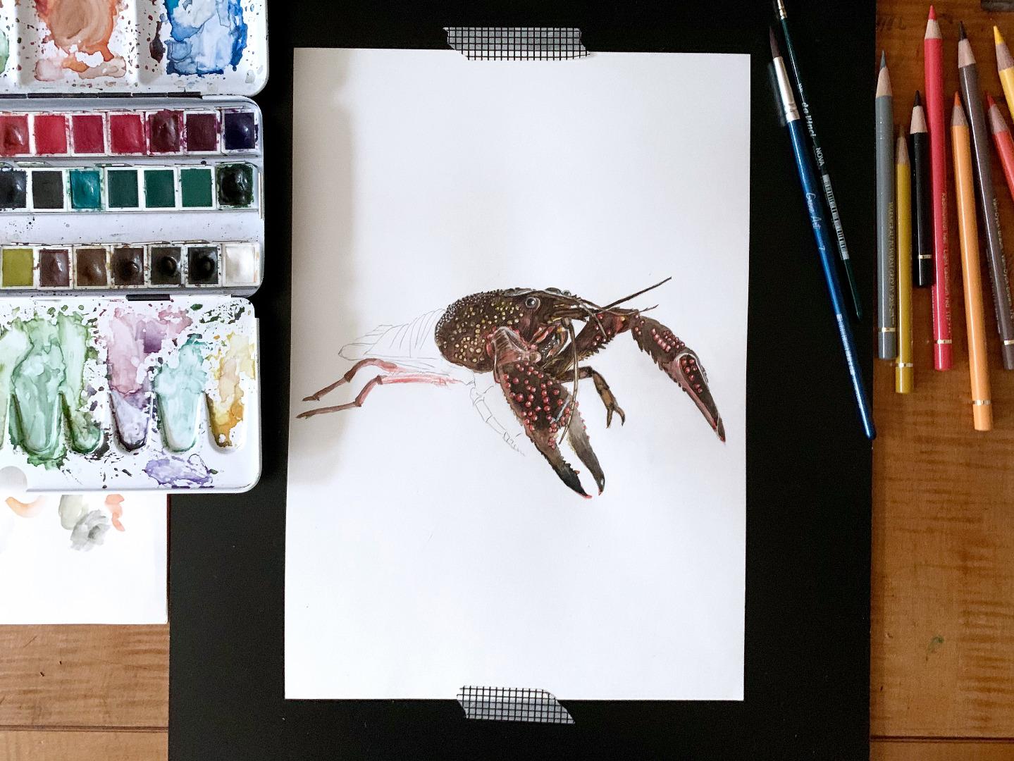 Hummer Poster Kunstdruck Zeichnung Meerestier 3