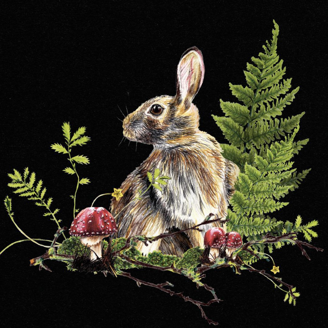 Hase im Wald , Poster, Kunstdruck, A4, Buntstiftzeichnung - 2