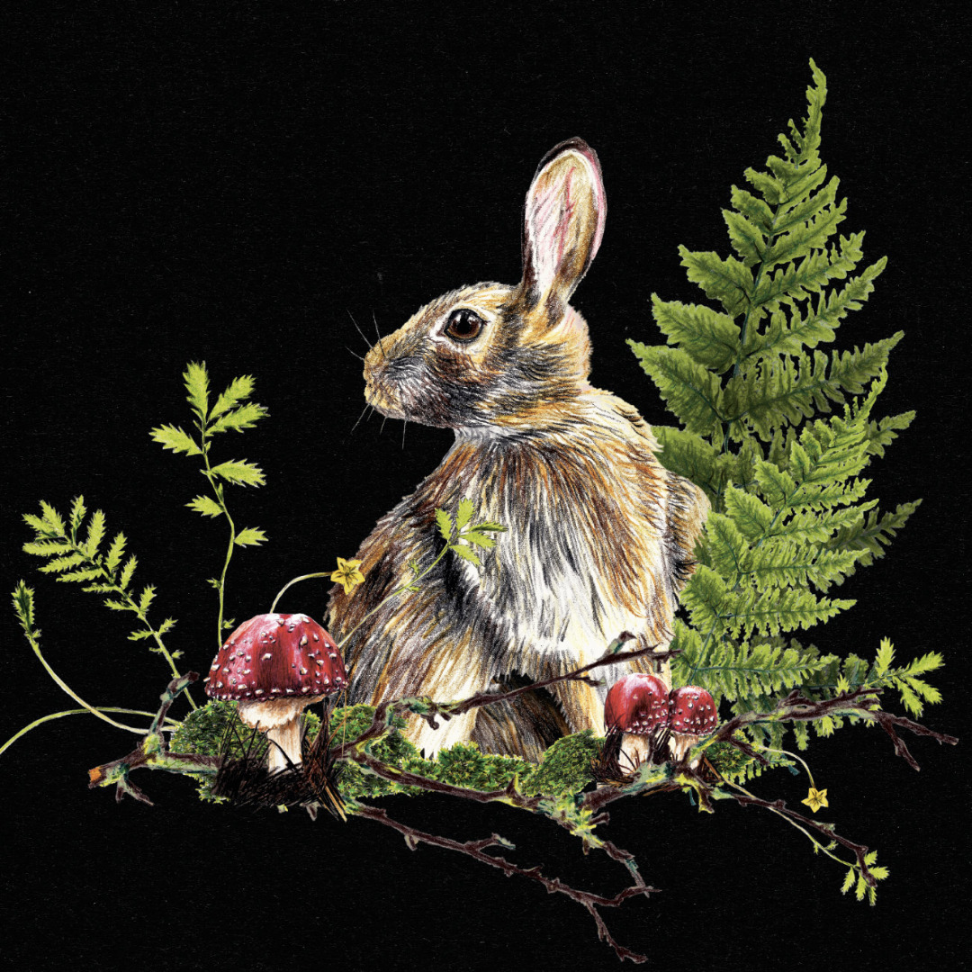 Hase im Wald Poster Kunstdruck A4 - 2