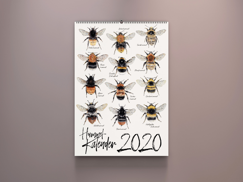 Wandkalender 2020, Kalender 2020 kaufen, Hummel Zeichnungen, Hummelarten, Kunstdrucke kaufen, Wildbienen, Illustrationen Janine Sommer - 1