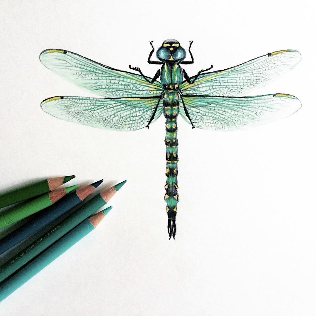 Libelle / 01 Zeichnung Kunstdruck A5