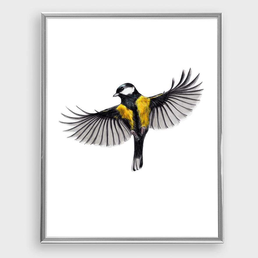 Kohlmeise im Flug Zeichnung Poster Kunstdruck - 3