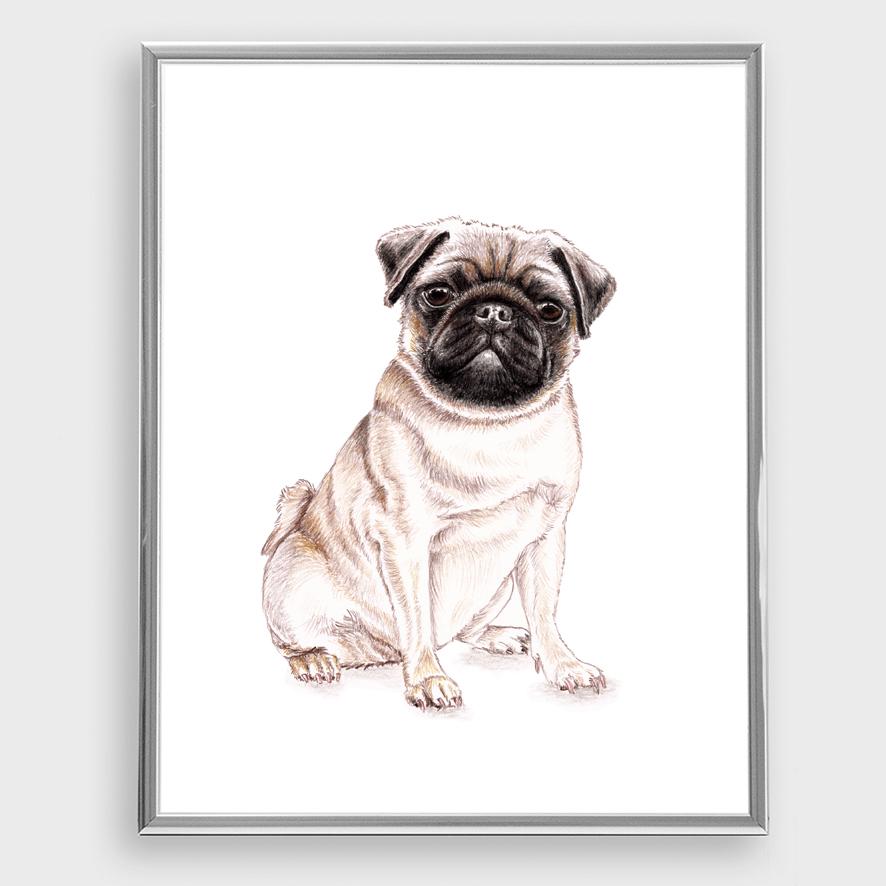 Mops Portraet Zeichnung Poster Kunstdruck A4