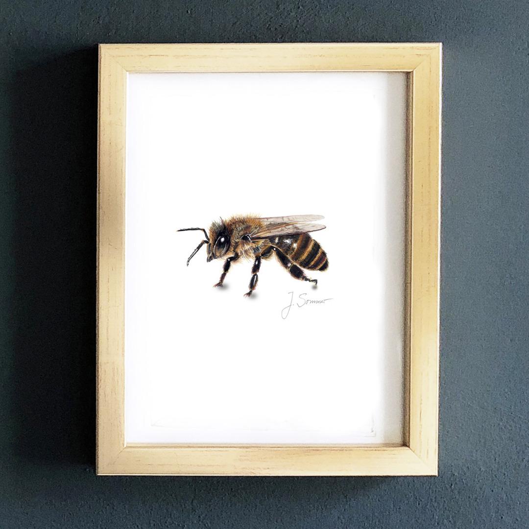 Biene 02 Zeichnung Kunstdruck DIN A5