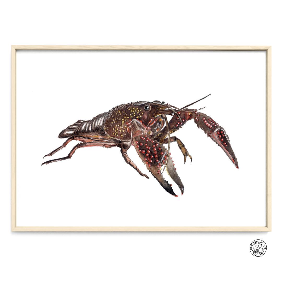 Hummer Poster Kunstdruck Zeichnung Meerestier
